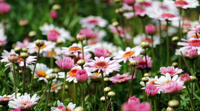 La Primavera tu Hogar Renueva
